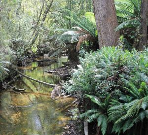 angie_baby72-hastings-caves-forest