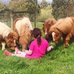 Whispering Spirit Holiday Cottages & Miniature Pony Farm