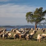 Southern Tasmania Visitor Guide
